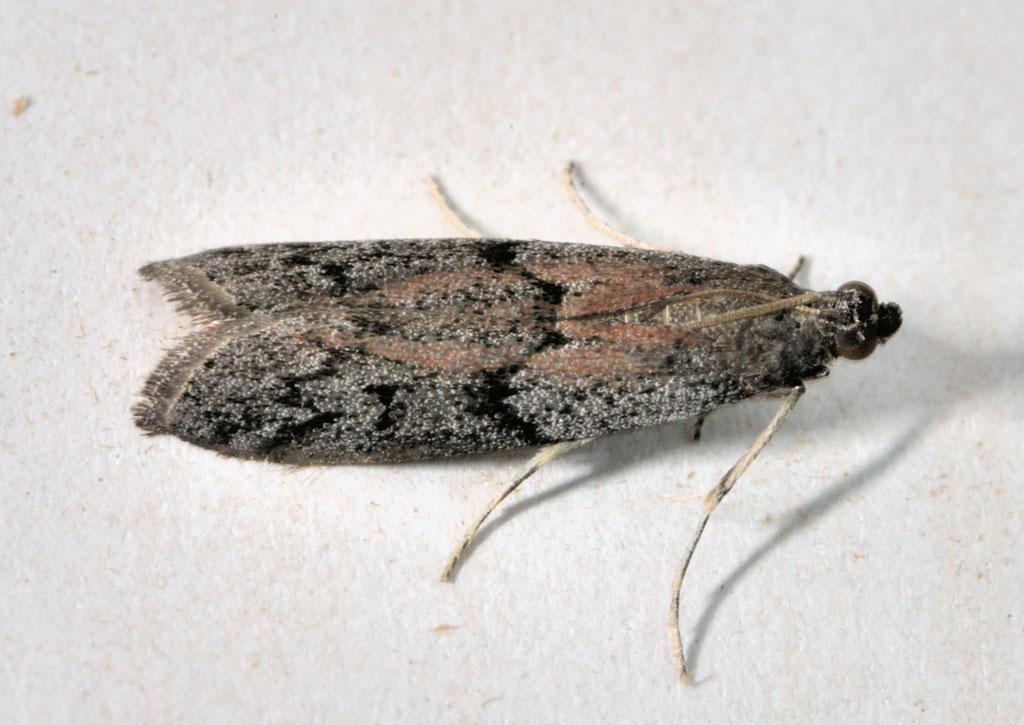 Mittel gegen w rmer und bew hrte for Trauerfliegen larven