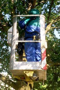 Bekämpfungsmaßnahme eines vom Eichenprozessionsspinner (EPS) befallenen Baumes - Leeser & Will Schädlingsbekämpfung