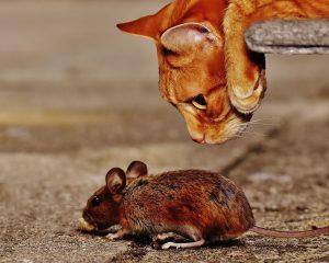 Leeser & Will Schädlingsbekämpfung - mobile Eingreiftruppe - Katz und Maus